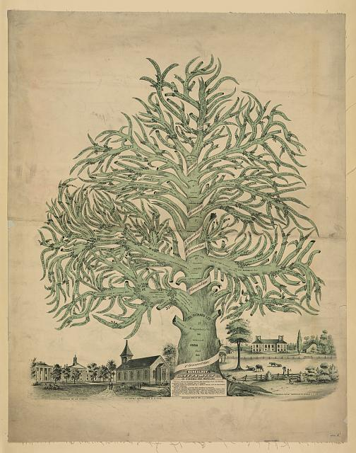 A decorative family tree for the Lee family from the Library of Congress.