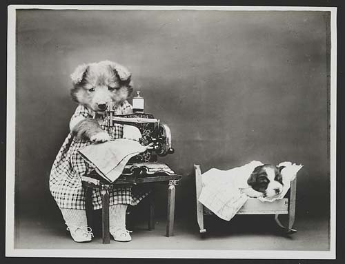 fun old photos, ancestor dog photos