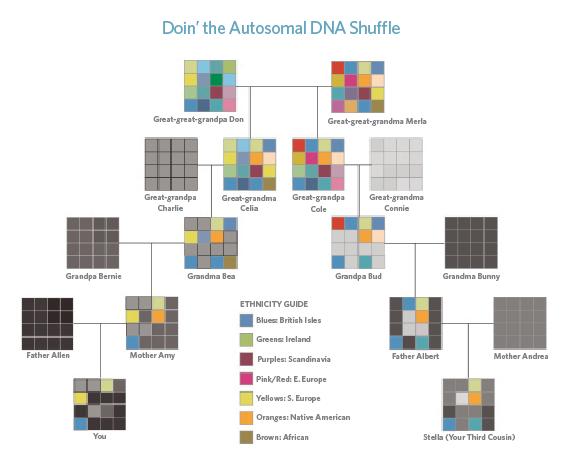 Autosomal DNA ethnicity chart.