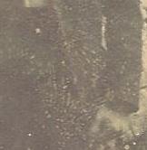 naylorMy Brother George fingerprint (2).jpg