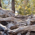 Untangle Your Roots with RootsMagic Genealogy Software