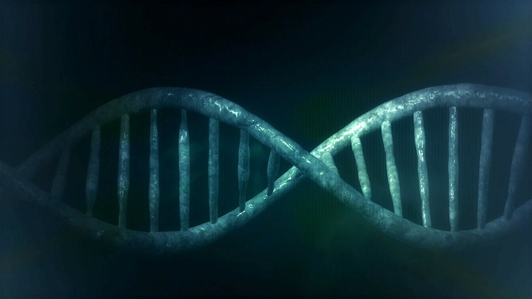 dna adoption genealogy