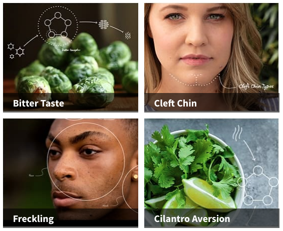 ancestrydna traits