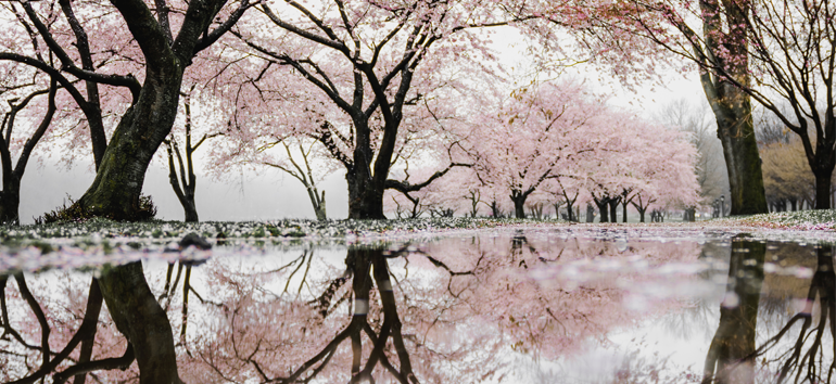 Learn about mirror trees and how to use them with your DNA results.