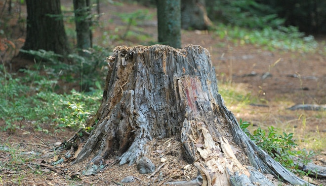 Tree stump.