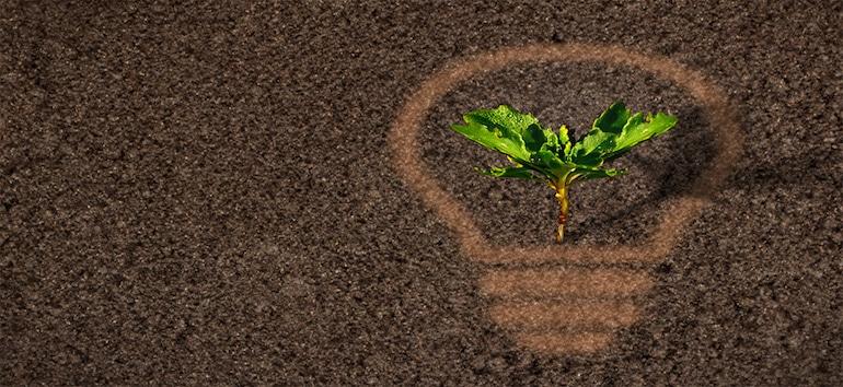 Green leaves in a lightbulb